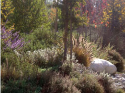 Drought Tolerant Landscapes