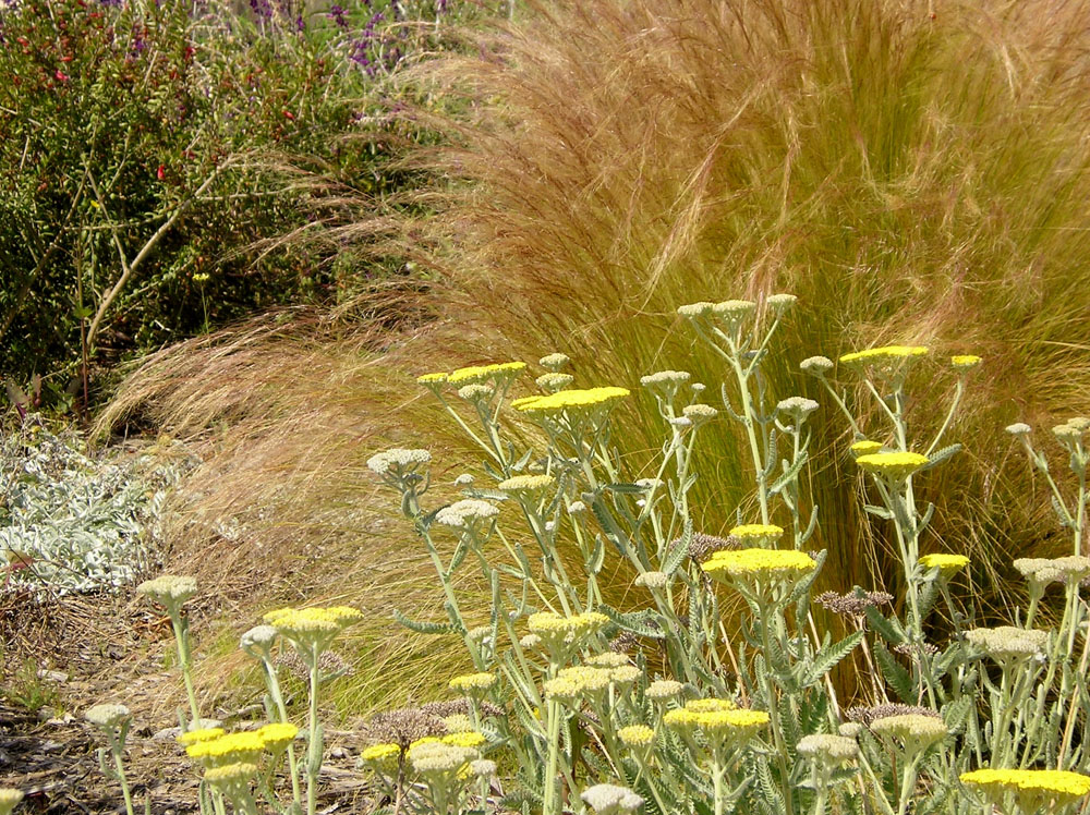 ornamental grass and flowers